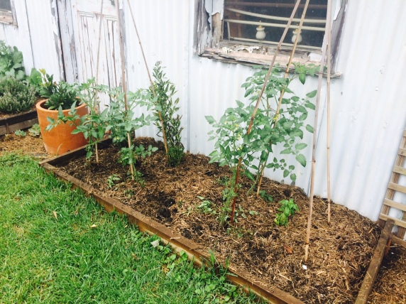 Compost Tomatoes